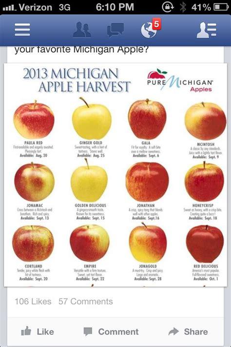 apple varieties apple varieties apple varieties cultivars pinterest