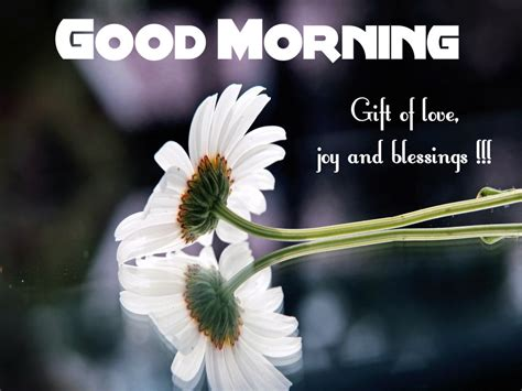 images of love good morning good morning wishes with flowers pictures images page 3