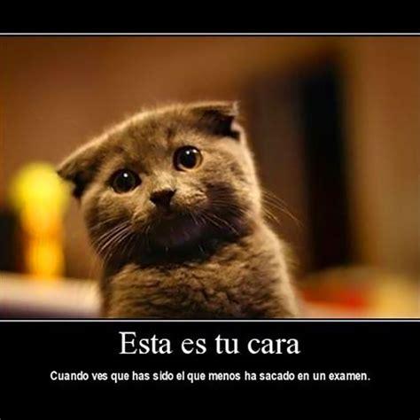 imagenes de wolverine graciosas gatos graciosos con frases chistosas