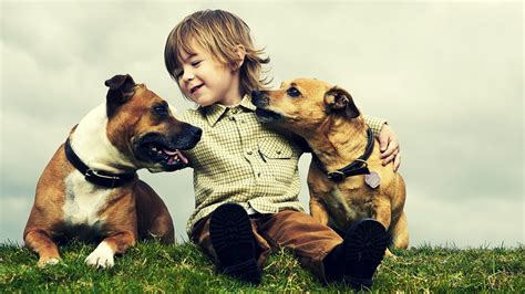 two dogs and a cat two dogs and a kid hd wallpapers