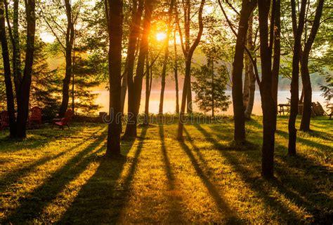 sunrise   trees   misty lake stock photo