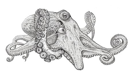 Octopus Home by Frequently Asked Questions Cal State Monterey Bay