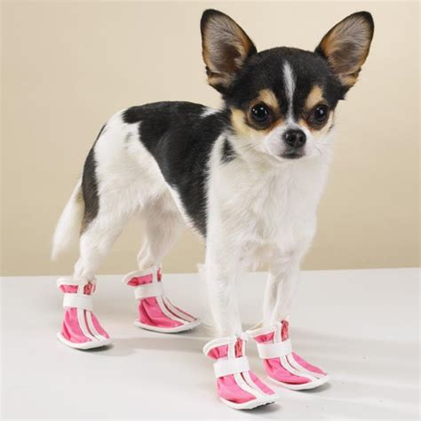 shoes with dogs on them dogs that don t like the snow the pet product guru