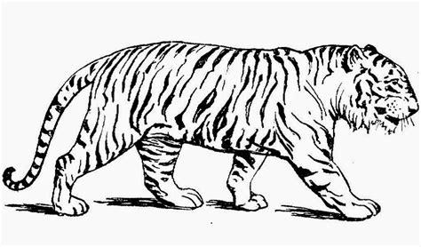 easy tiger coloring pages easy tiger tattoo coloring pages