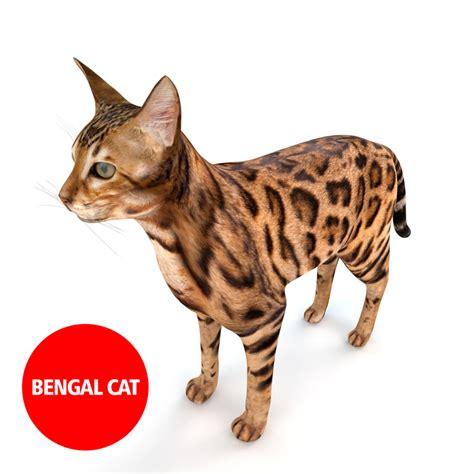 Kaos 3d Umakuka Cat Bengal 3d model bengal cat fur