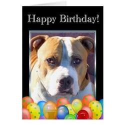 happy birthday pitbull greeting card zazzle
