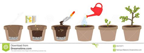 How To Plant A Flower Garden Step By Step How To Grow Plants Stock Vector Illustration Of Ecology 65472371