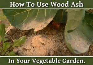 Wood Ashes In Garden by The World S Catalog Of Ideas