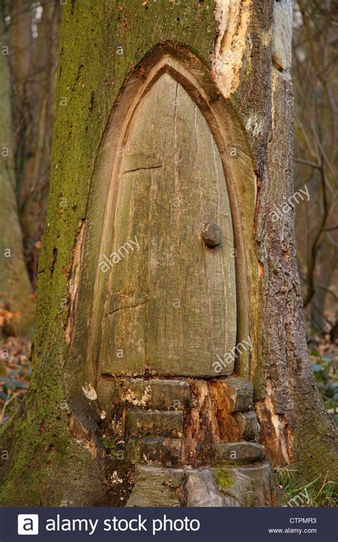 Tree With A Door by Wood Carving Of Small Door In Base Of Tree Derbyshire