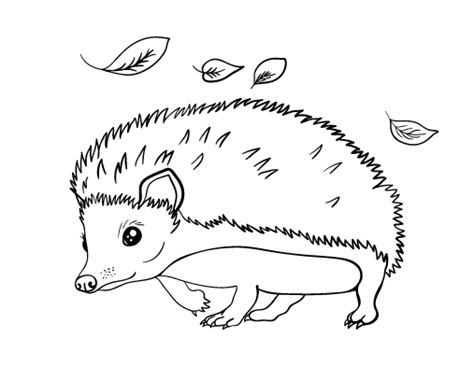 coloring page of a hedgehog printable hedgehog coloring page free pdf download at