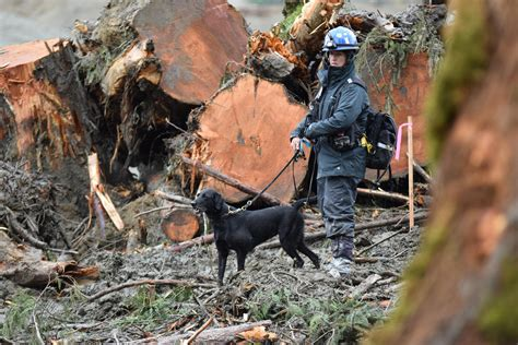 puppy finder rescue a protective search and rescue harness the kt heroes caign bark and swagger