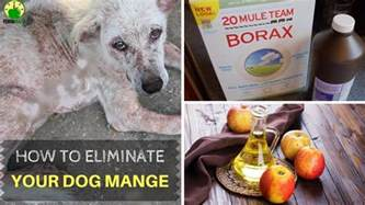 how to cure mange in dogs home remedies for mange
