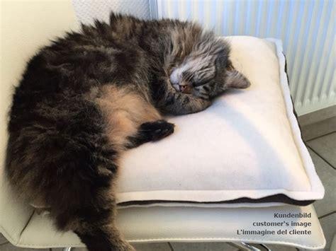 cuscini per gatti cuscino per gatti con interno lattice pregiato