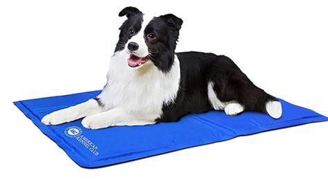 cooling blanket for dogs best blankets pets lover