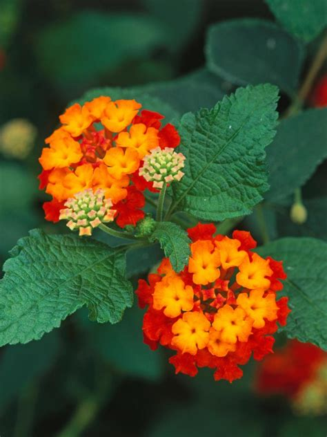 Colorful Garden Flowers Bright Beautiful Flowers For A Colorful Garden Hgtv