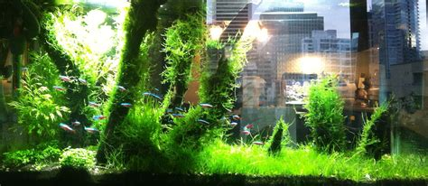 java river layout my main aquarium an amazon tank although the plants are