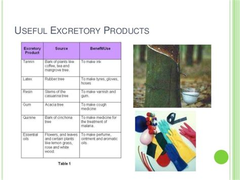 PMR Form 3 Science Chapter 3 Plant Excretion