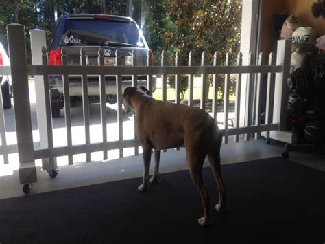Garage Gate For Dogs by Diy Pet Friendly Gates For The Garage Mobile And
