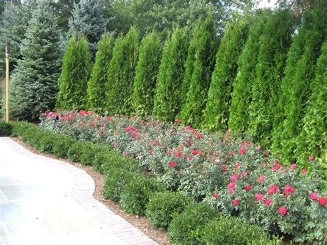 Flowering Trees For Small Gardens Evergreen Trees For Garden Exhort Me