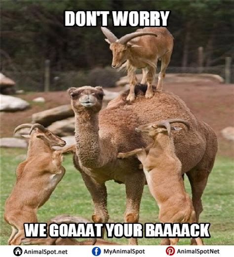 Happy Goat Meme - goat memes