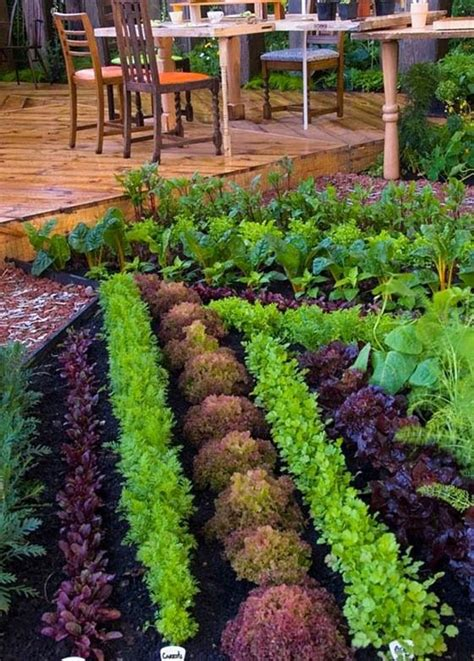 Vegetable Garden Plans For Beginners Ayanahouse Vegetable Gardens For Beginners