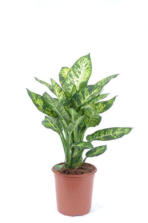 plante d int 233 rieur laquelle choisir quand on n a pas la