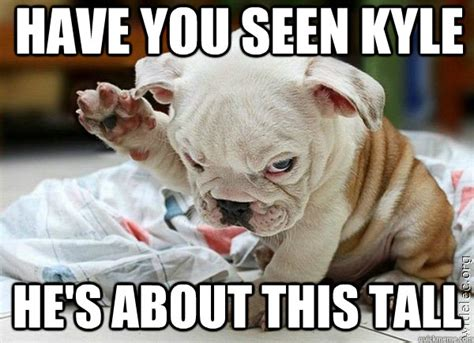 Kyle Meme - seen kyle memes