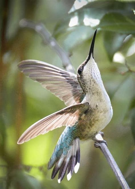 can i install hummingbird flying on a christmas tree humming bird https www luisfjacome66 natures tender creatures in gardens