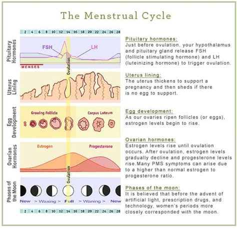 why do we get mood swings during periods menstrual cycle women s health network