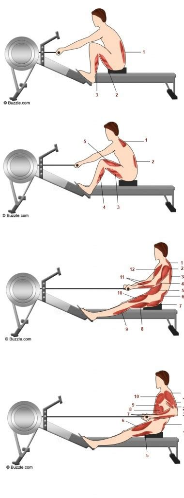 rowing machine diagram rowing machine benefits and workouts for beginners