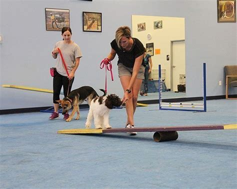 puppy classes near me scottsdale near me trainers