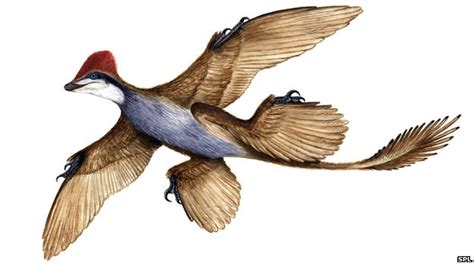lucertole volanti four winged dinosaur is news