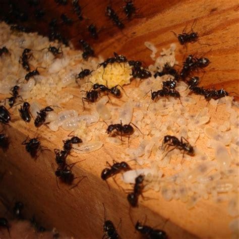 Will Termites Eat Insulation
