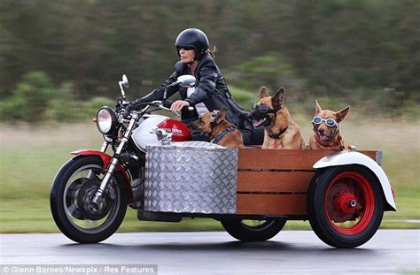 Motorradbrille Hund by In For A Ruff Ride Trio Of Dogs Hit The Open Road In A
