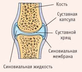 суставные поверхности плечевого сустава