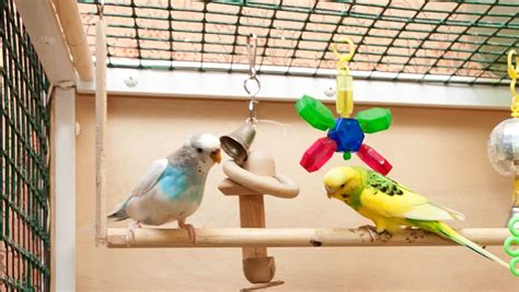 budgie swing best budgie toys toys for budgies budgie guide guide