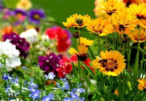 garden blumen farben im garten blumen gekonnt arrangieren gardens