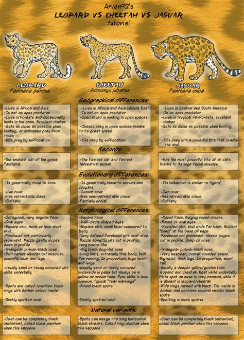 jaguar vs cheetah leopard vs cheetah vs jaguar by arven92 on deviantart