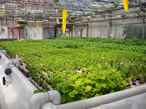 backyard hydroponics aquaponics raft system john fay aquaponics ideas to