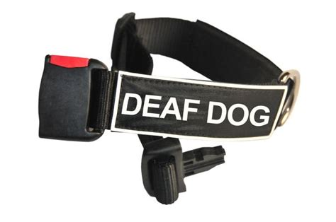 deaf collar collar with velcro patches by dean deaf ebay