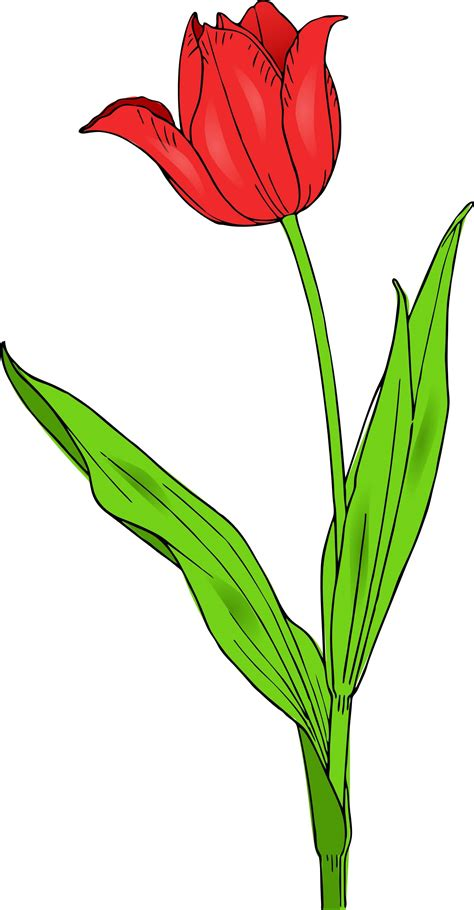red tulip tattoo designs 29 tulip flower tattoos designs and stencils collection