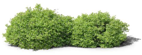 Garden Decorative Bushes by Two Cut Out Ordinary Small Bushes Cut Out Trees And