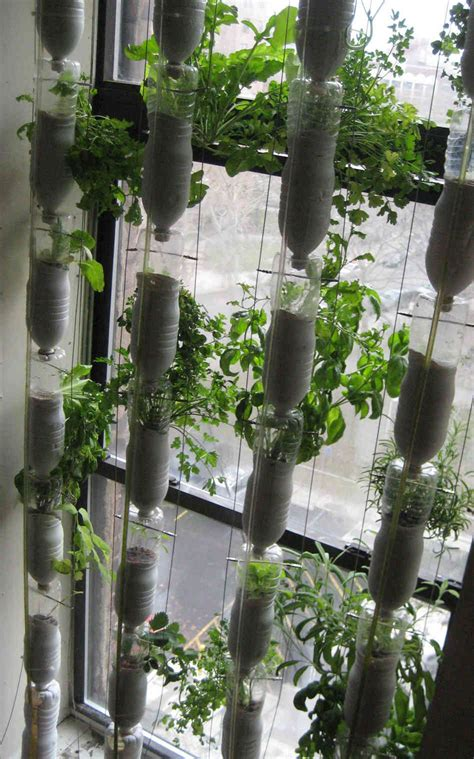Window Gardens | window farming a do it yourself veggie venture npr