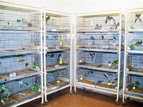 vendita gabbie uccelli uccelli emporio della natura