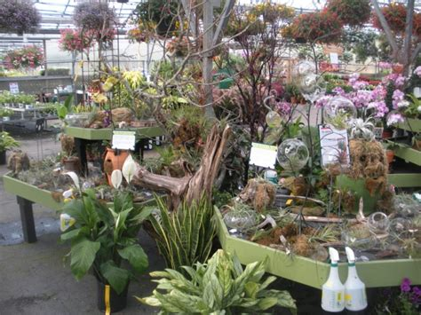 mahoneys garden center
