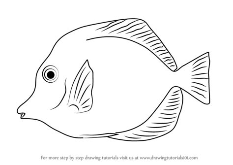 Yellow Tang Coloring Page | learn how to draw a yellow tang fishes step by step