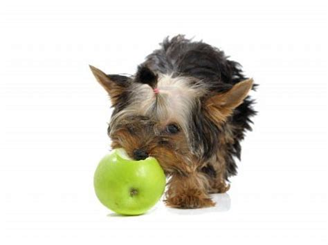 apples for dogs the friendly groomer keeping your s coat beautiful food