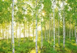 forest murals for walls wall mural photo wallpaper sunny forest scene green