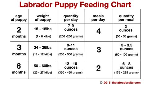 how much should a yorkie eat feeding your labrador puppy chart labradors and
