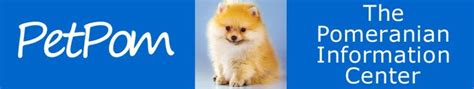 pomeranian costs price cost of pomeranian puppies